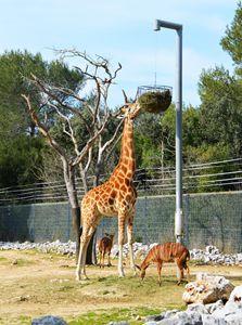 Giraffe - Helen A. Lisher