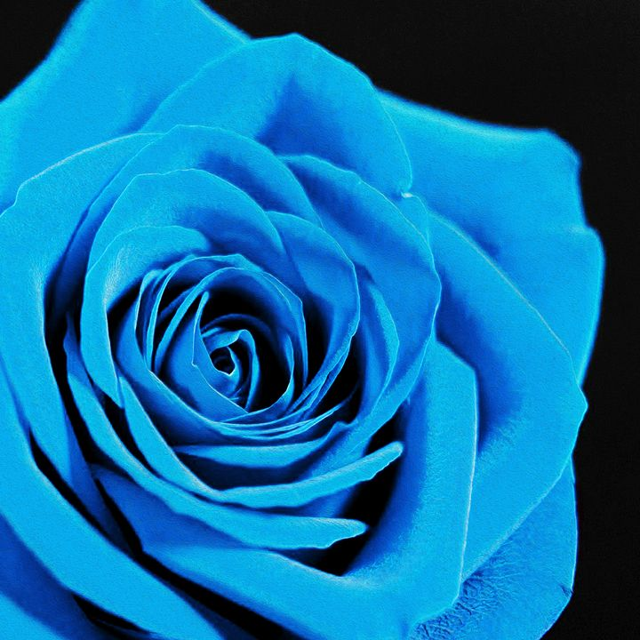 Blue rose - Helen A. Lisher