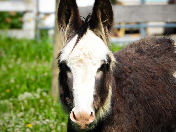 Donkey - Larry D. Lefler