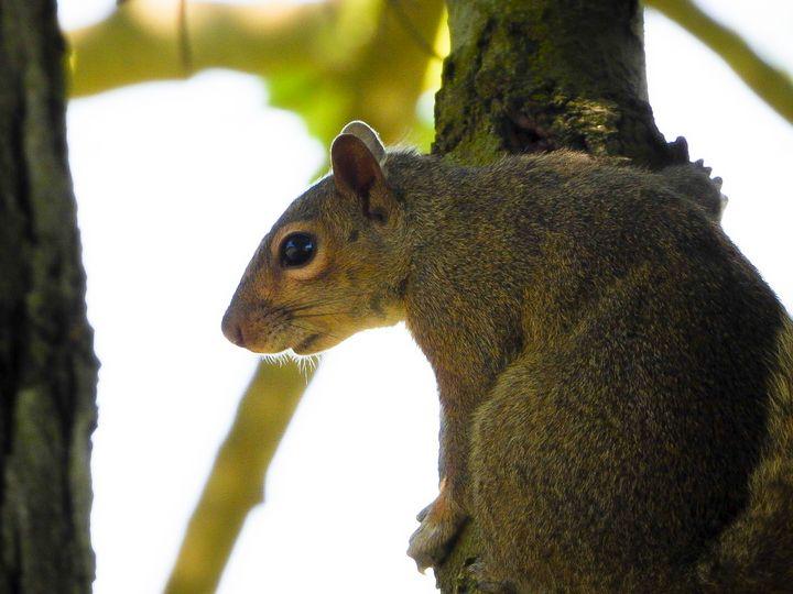 Portrait of a Squirrel III - Larry D. Lefler