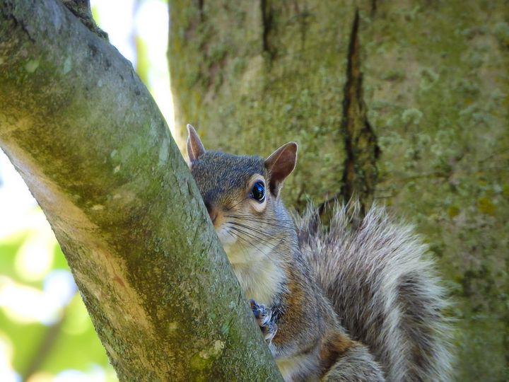 Portrait of a Squirrel II - Larry D. Lefler
