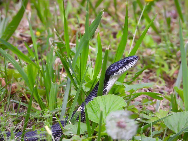 Snake in the Grass - Larry D. Lefler