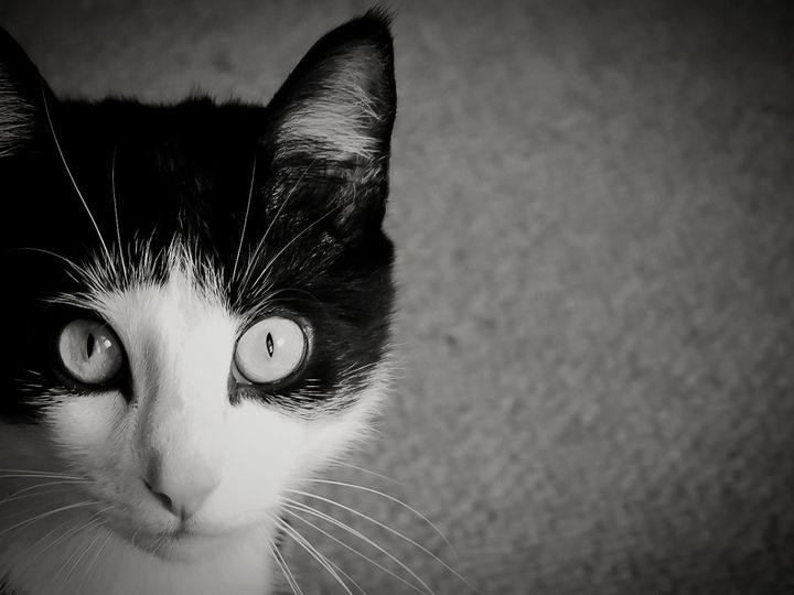 Portrait of a Cat II - Larry D. Lefler