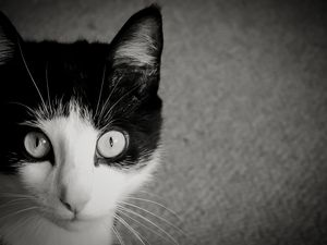 Portrait of a Cat II