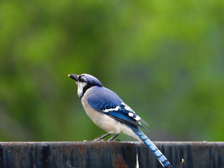 Life of a Bird IV - Larry D. Lefler