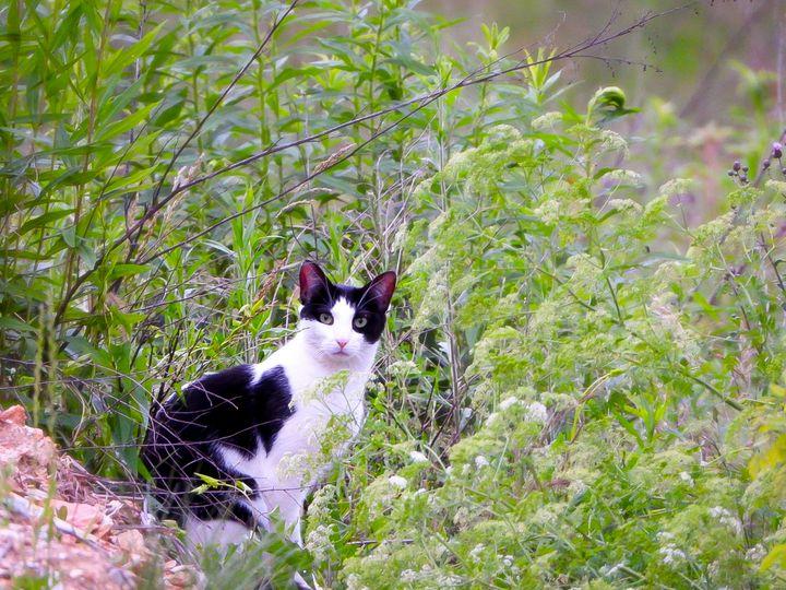 Portrait of a Cat III - Larry D. Lefler