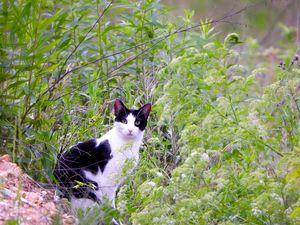 Portrait of a Cat III