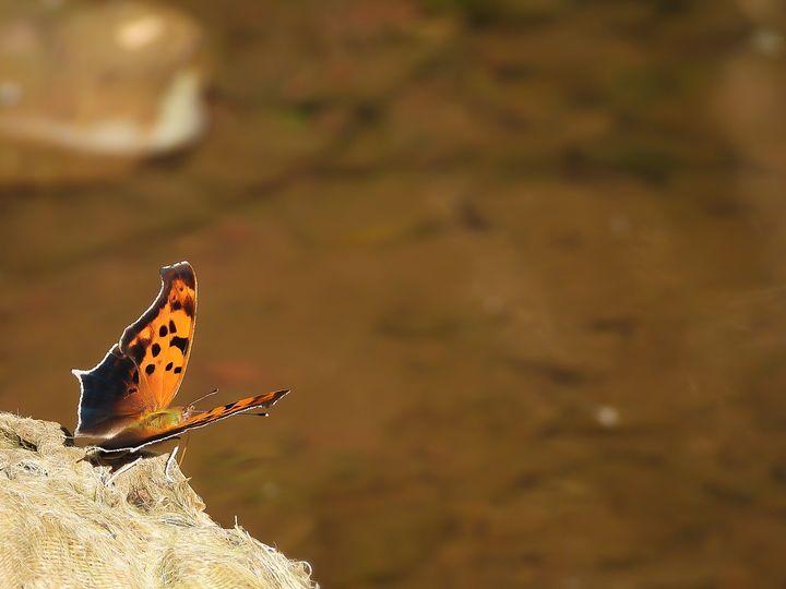 Life of a Butterfly II - Larry D. Lefler