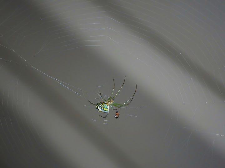 Life of a Spider - Larry D. Lefler