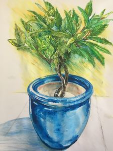 Bay tree in blue pot