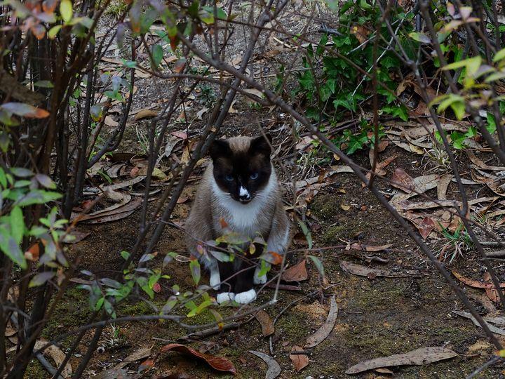 Stray cat - Ember