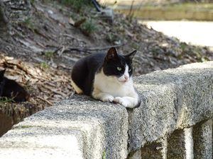 Black and White stray cat