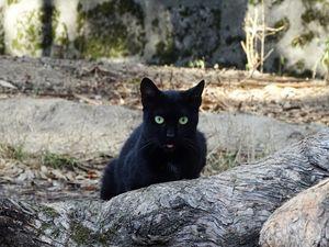 Black stray cat