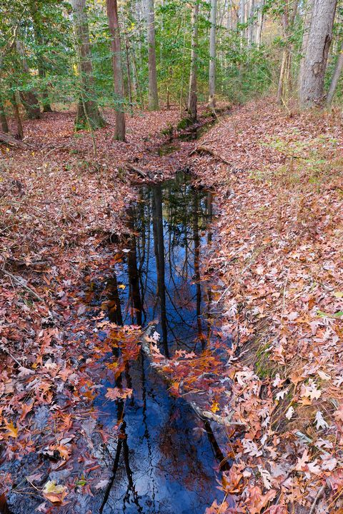 Autumn Reflections - Creative Artistry by Janice Solomon