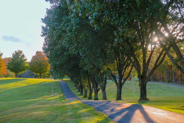 Tree-lined Lane - Creative Artistry by Janice Solomon