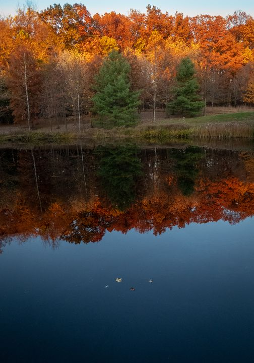 Fish Pond and Golden Trees - Creative Artistry by Janice Solomon