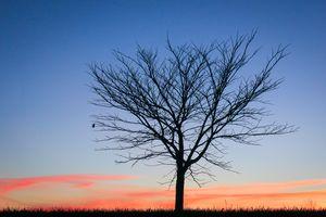 Last Leaf at Sunset