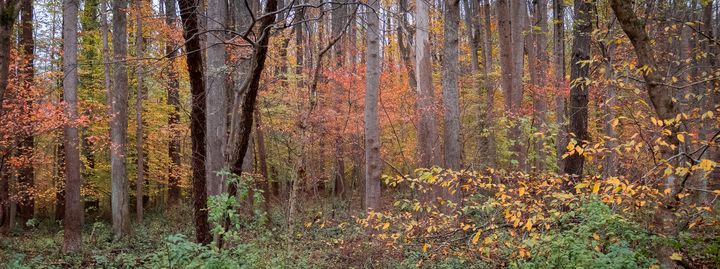Fall Panorama - Creative Artistry by Janice Solomon