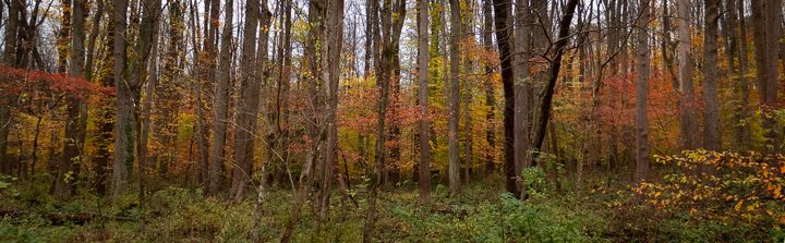 Autumn Panorama - Creative Artistry by Janice Solomon