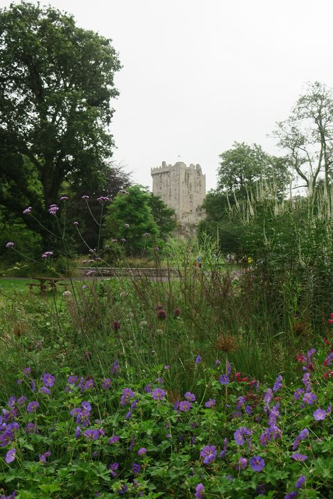 Blarney Castle and purple flowers - Creative Artistry by Janice Solomon