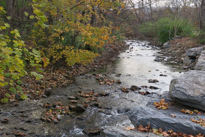 Stream and autumn colors - Creative Artistry by Janice Solomon