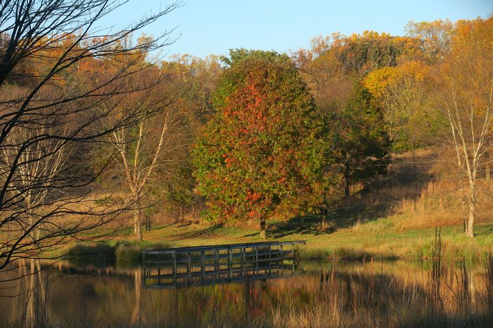 Autumn colors reflecting on lake - Creative Artistry by Janice Solomon