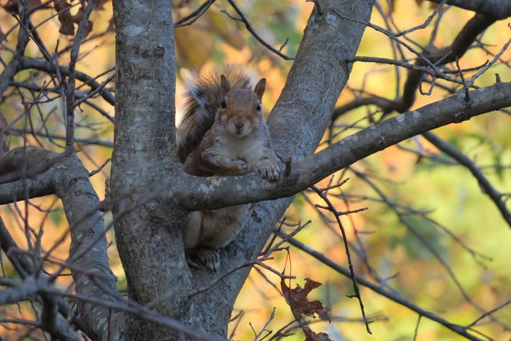 Squirrel watching me - Creative Artistry by Janice Solomon