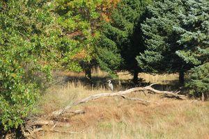 Great blue heron on fallen tree