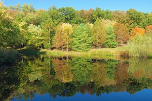 Reflections of Autumn on Fish Pond