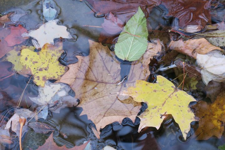 Leaves of autumn - Creative Artistry by Janice Solomon