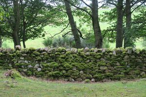 Scottish stone wall and moss
