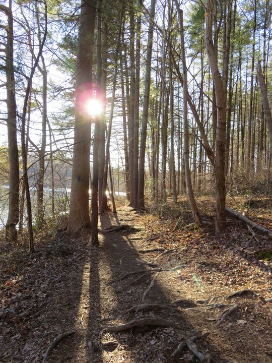 Winter sunlight on forest path - Creative Artistry by Janice Solomon