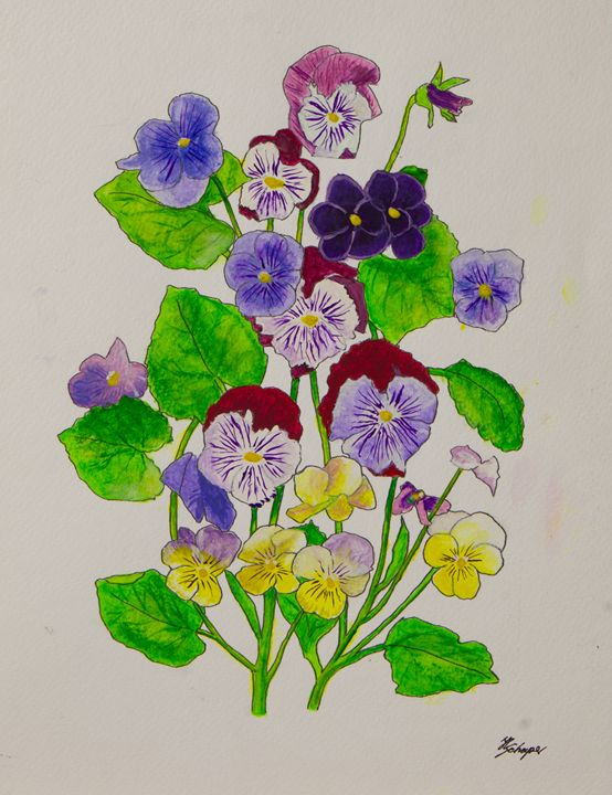 Pansies - Schaper's Gallery