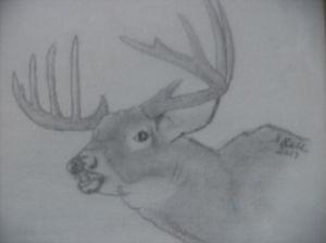 Maine White Tailed Buck - ART