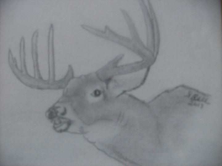 Maine White Tailed Buck - ART