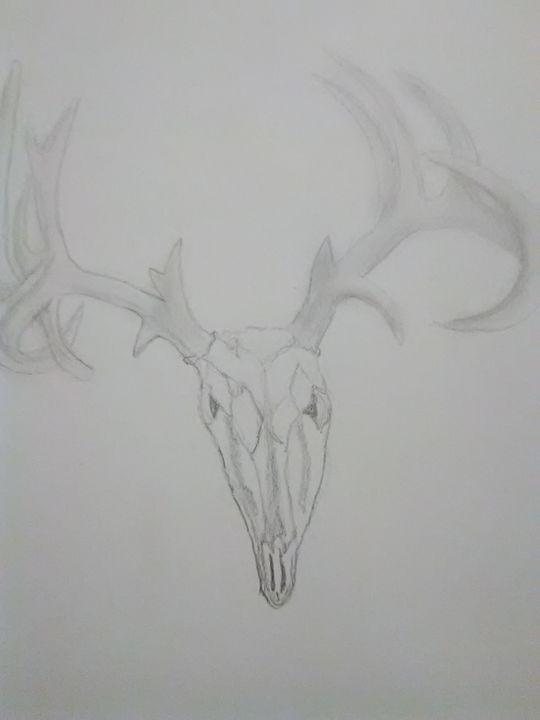 Buck skull - ART