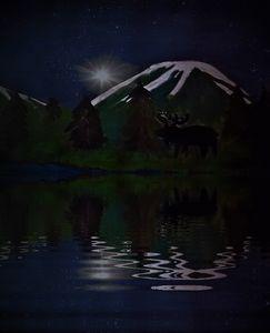 moose at night