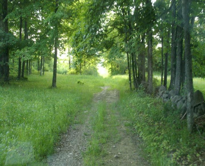 Pretty woods trail - ART