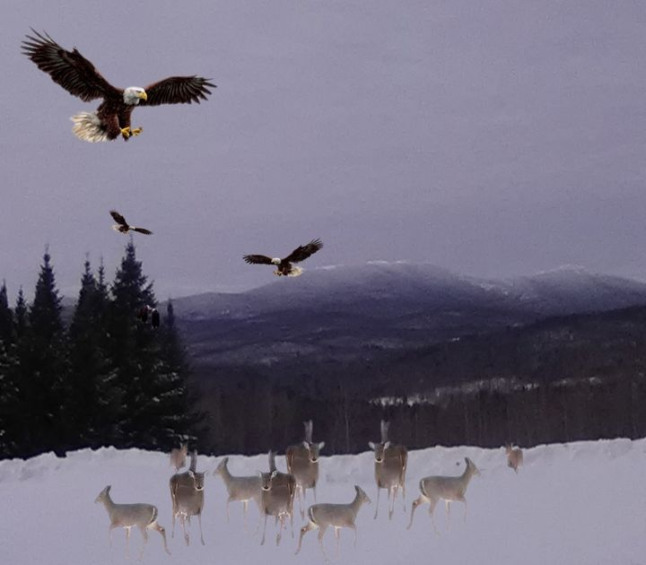 whitetail winter day - ART