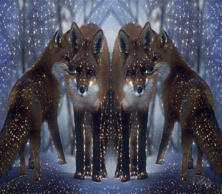 Fox in the night - ART