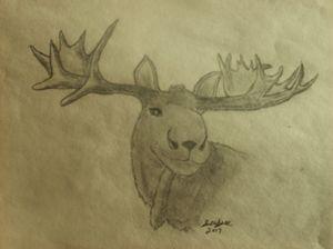 maine bull moose - ART