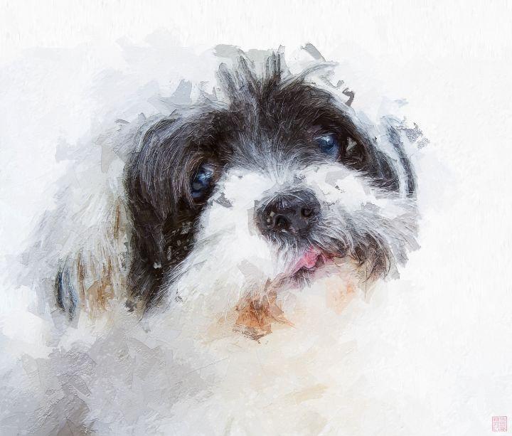 Dog - Paintings