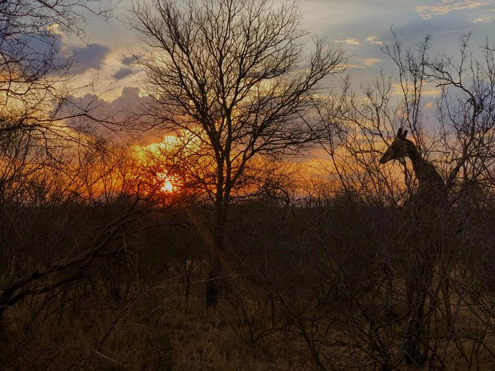 Giraffe In Sunset - Whatever By, Jes