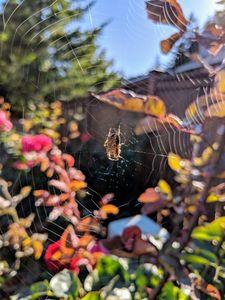 Webs in sunlight