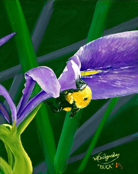 Bumblebee on a Wild Florida Iris - Bucks Art Studio