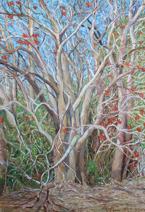 Flame Trees outside Berry NSW - Landscapes by Adrian