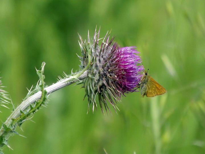 Moth in color. - Nel Designs