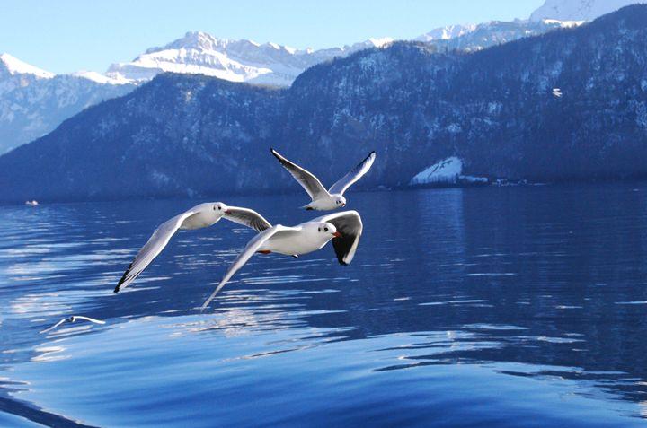Seagull Formation - RangeWoman