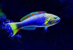 Blue Vibrant Fish