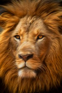Bold African Lion
